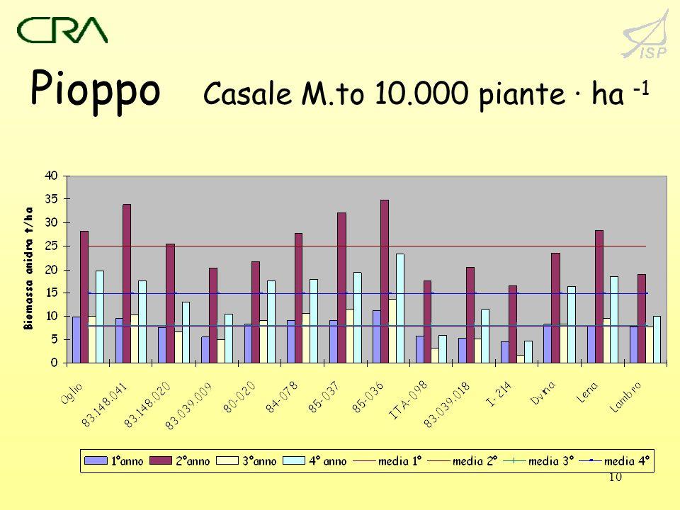 10 Pioppo Casale M.to 10.000 piante · ha -1