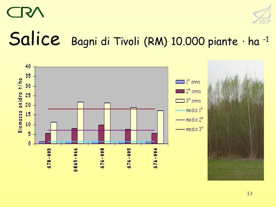 13 Salice Bagni di Tivoli (RM) 10.000 piante · ha -1