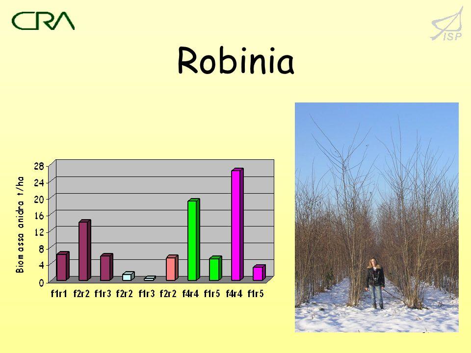 17 Robinia