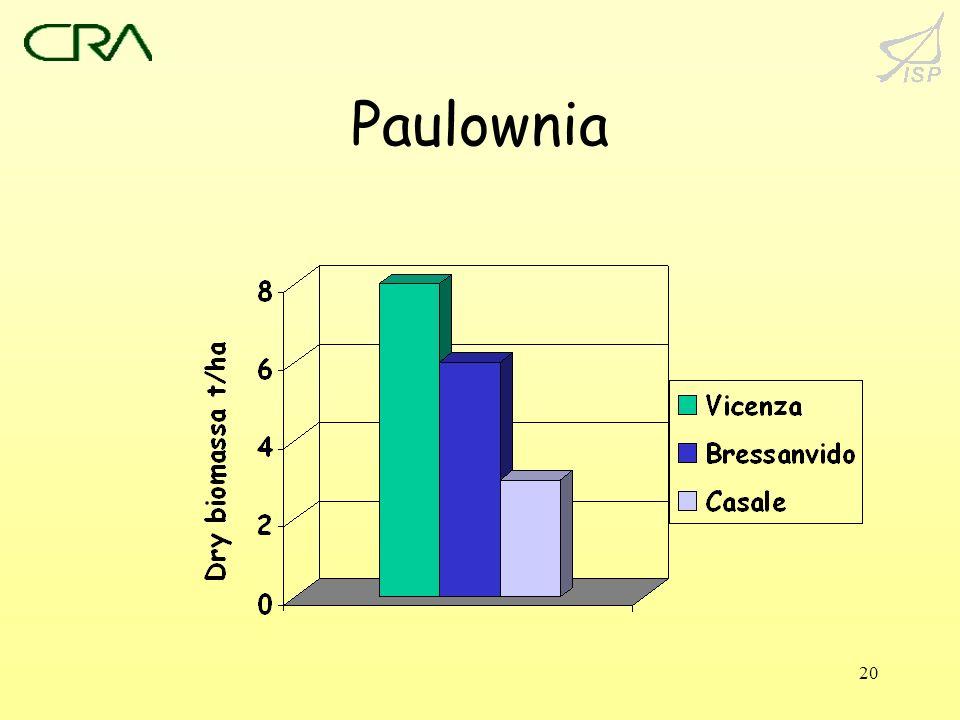 20 Paulownia