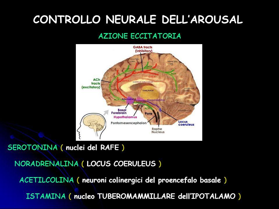 CONTROLLO NEURALE DELLAROUSAL AZIONE ECCITATORIA SEROTONINA ( nuclei del RAFE ) NORADRENALINA ( LOCUS COERULEUS ) ISTAMINA ( nucleo TUBEROMAMMILLARE d