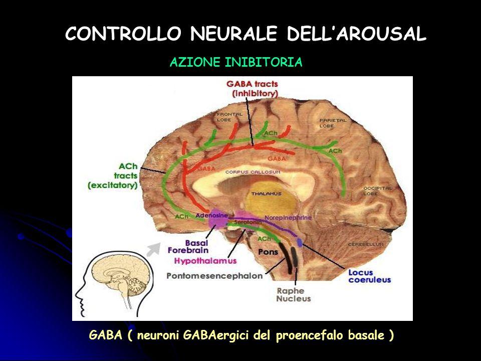 CONTROLLO NEURALE DELLAROUSAL AZIONE INIBITORIA GABA ( neuroni GABAergici del proencefalo basale )