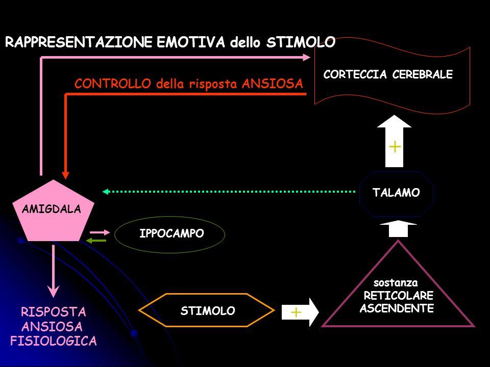 STIMOLO sostanza RETICOLARE ASCENDENTE TALAMO CORTECCIA CEREBRALE + + AMIGDALA RAPPRESENTAZIONE EMOTIVA dello STIMOLO CONTROLLO della risposta ANSIOSA