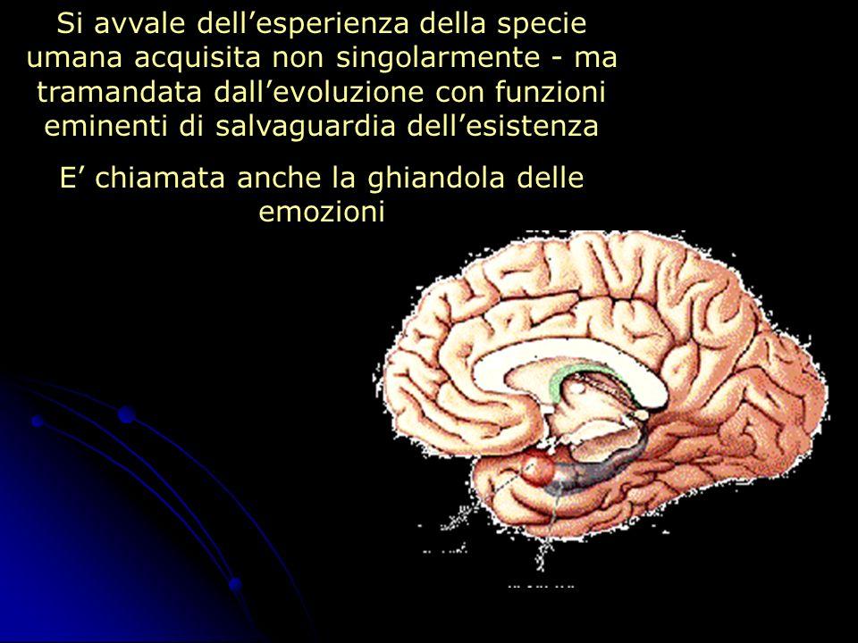Si avvale dellesperienza della specie umana acquisita non singolarmente - ma tramandata dallevoluzione con funzioni eminenti di salvaguardia dellesist