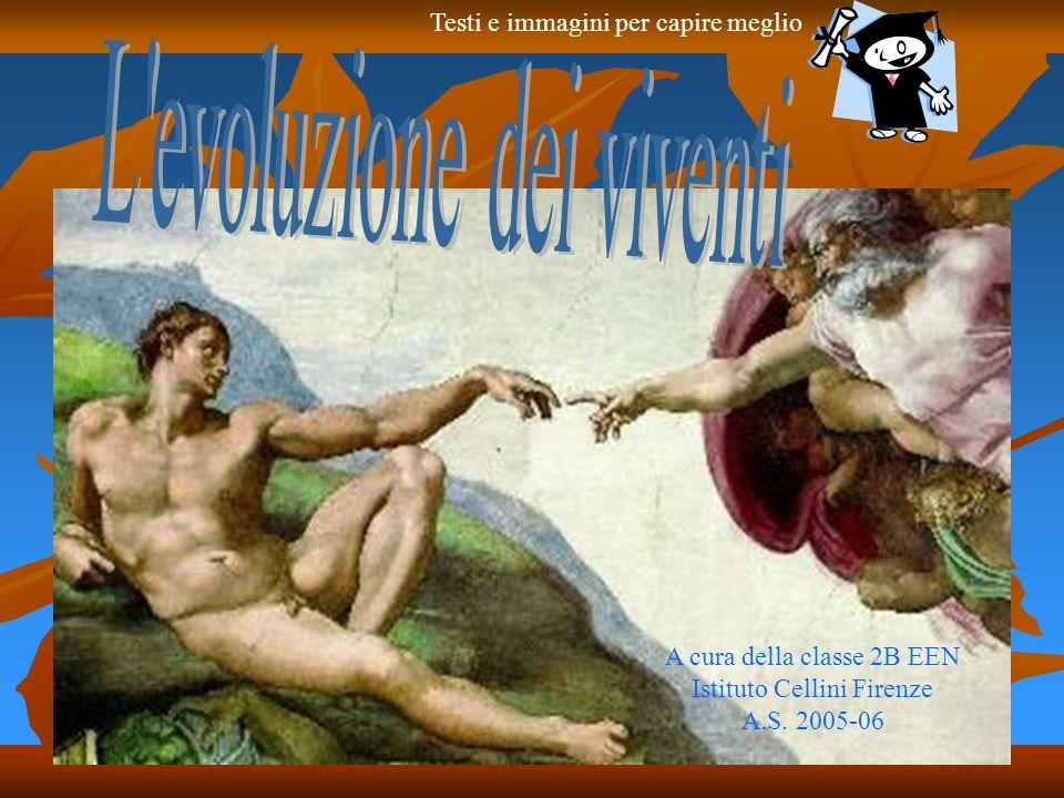 A cura della classe 2B EEN Istituto Cellini Firenze A.S. 2005-06 Testi e immagini per capire meglio
