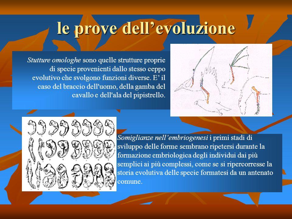 le prove dellevoluzione Stutture omologhe sono quelle strutture proprie di specie provenienti dallo stesso ceppo evolutivo che svolgono funzioni diver