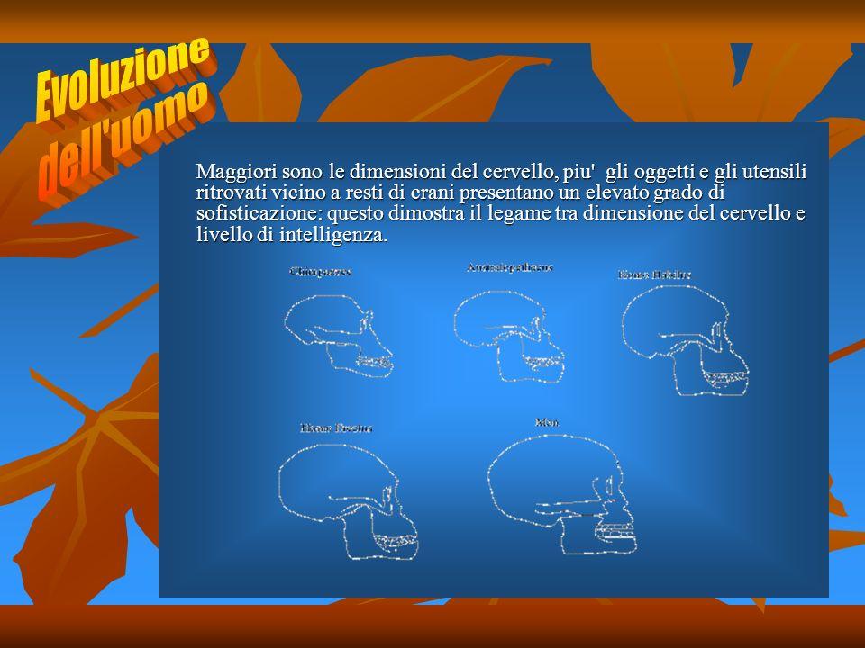 Maggiori sono le dimensioni del cervello, piu' gli oggetti e gli utensili ritrovati vicino a resti di crani presentano un elevato grado di sofisticazi