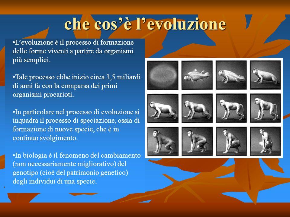 che cosè levoluzione Levoluzione è il processo di formazione delle forme viventi a partire da organismi più semplici. Tale processo ebbe inizio circa