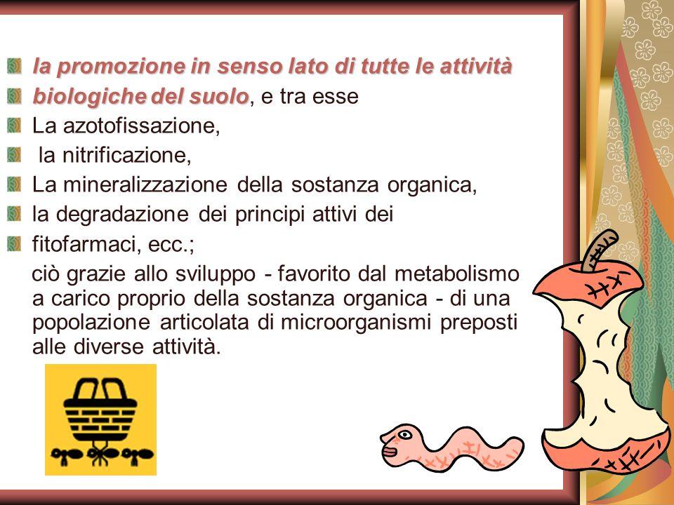 la promozione in senso lato di tutte le attività biologiche del suolo biologiche del suolo, e tra esse La azotofissazione, la nitrificazione, La miner