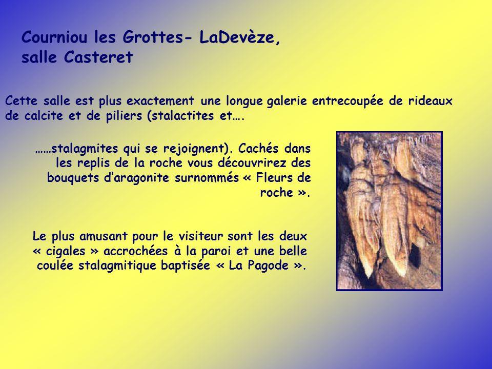 Courniou les Grottes- LaDevèze, salle Casteret ……stalagmites qui se rejoignent). Cachés dans les replis de la roche vous découvrirez des bouquets dara