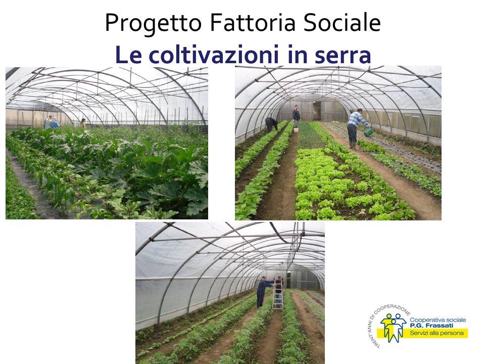 Progetto Fattoria Sociale Le coltivazioni in serra 15/01/2010