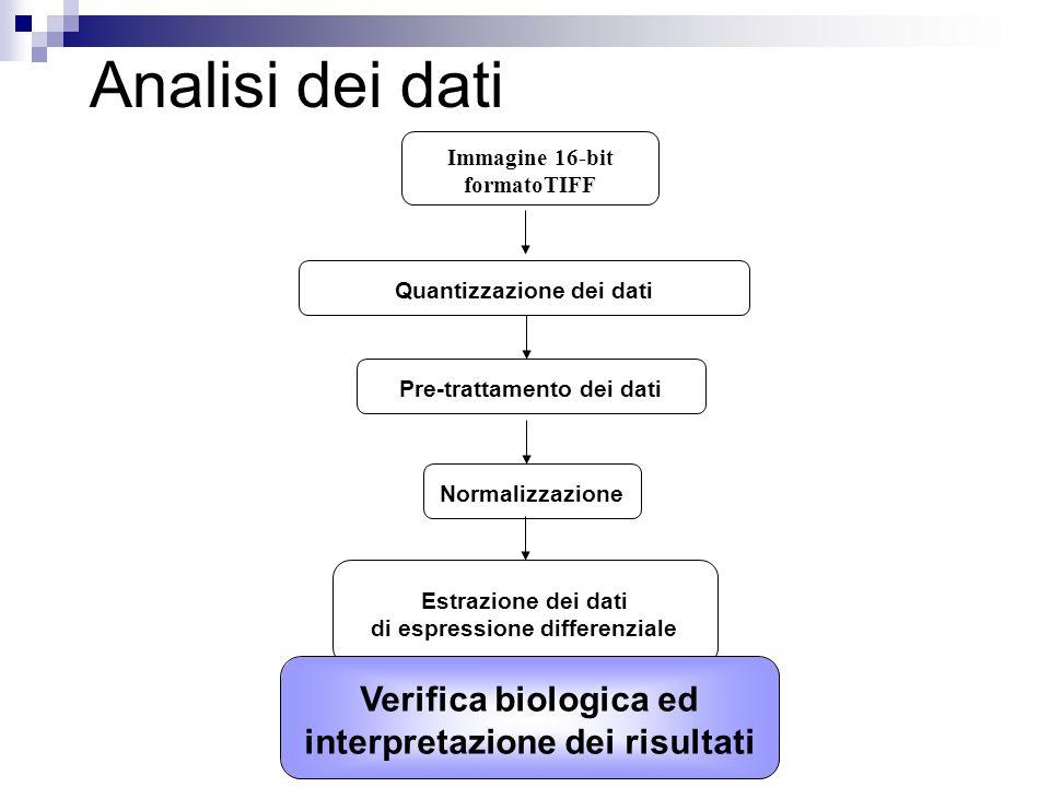 Analisi dei dati Quantizzazione dei dati Pre-trattamento dei dati Immagine 16-bit formatoTIFF Normalizzazione Verifica biologica ed interpretazione de