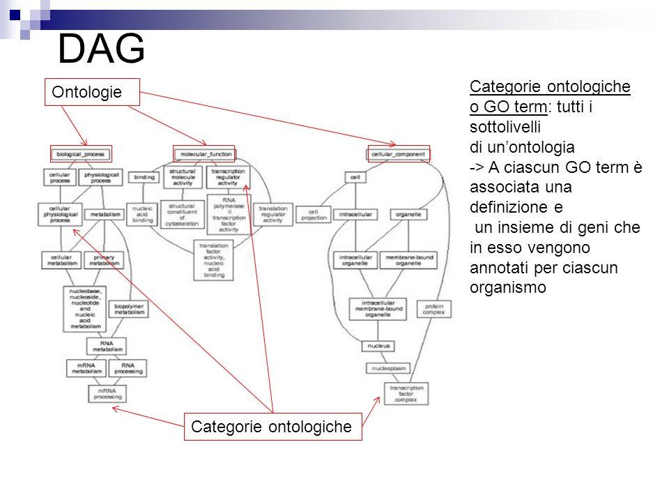 DAG Ontologie Categorie ontologiche o GO term: tutti i sottolivelli di unontologia -> A ciascun GO term è associata una definizione e un insieme di ge