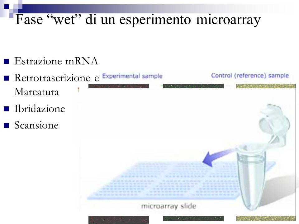 Analisi dei dati Quantizzazione dei dati Verifica biologica ed interpretazione del risultato Pre-trattamento dei dati Estrazione dei dati di espressione differenziale Immagine 16-bit formatoTIFF Normalizzazione Quantizzazione dei dati