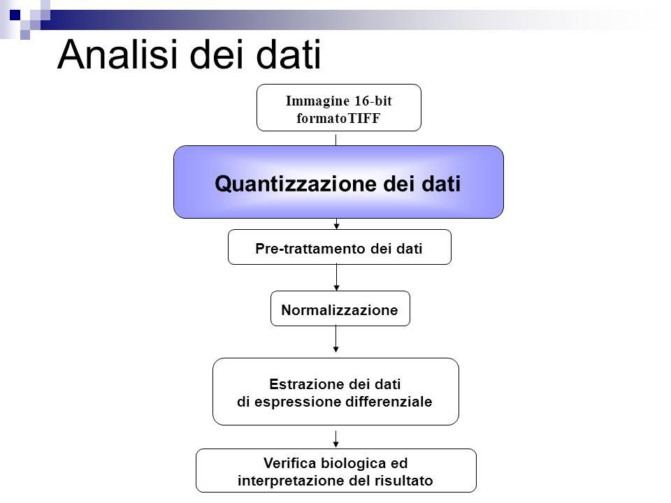Analisi dei dati Quantizzazione dei dati Verifica biologica ed interpretazione del risultato Pre-trattamento dei dati Estrazione dei dati di espressio