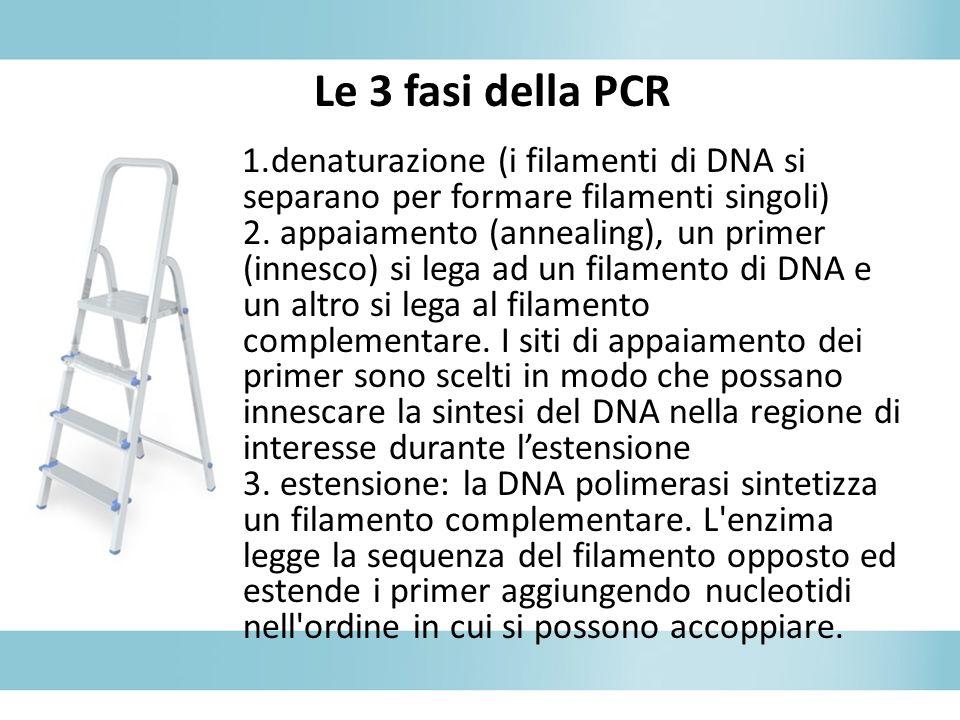 1.denaturazione (i filamenti di DNA si separano per formare filamenti singoli) 2. appaiamento (annealing), un primer (innesco) si lega ad un filamento