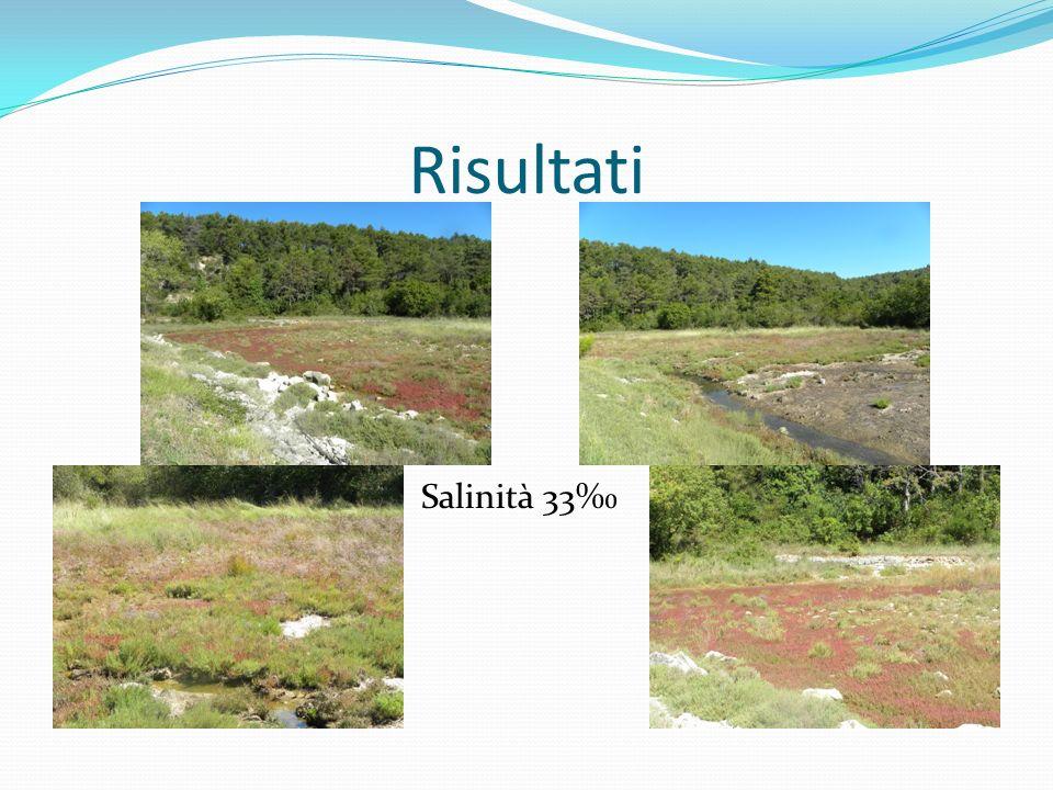 Curiosità Alcune alofile sono commestibili,per esempio la Salicornia ed il finocchio di mare o Crithmum