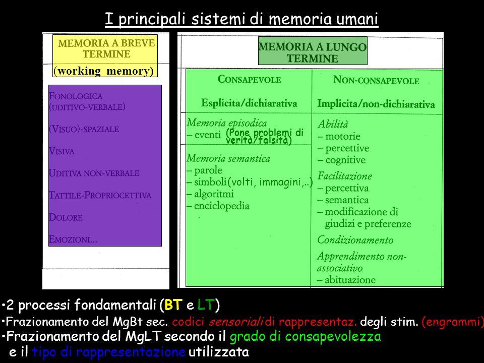 (Pone problemi di verità/falsità) (volti, immagini,..) 2 processi fondamentali (BT e LT) (working memory) I principali sistemi di memoria umani Frazio