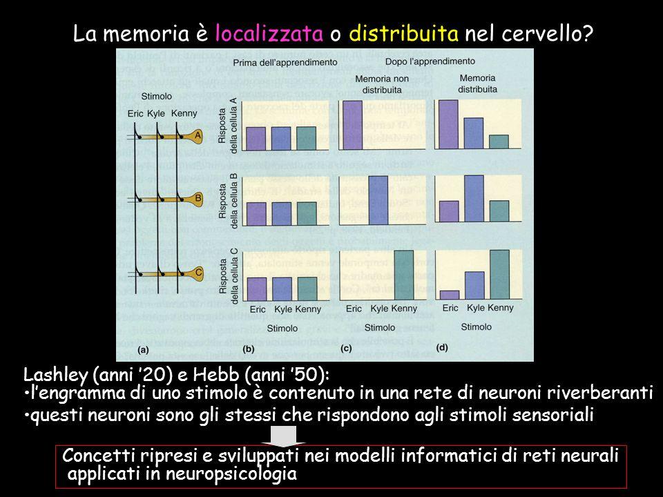 La memoria è localizzata o distribuita nel cervello? Lashley (anni 20) e Hebb (anni 50): lengramma di uno stimolo è contenuto in una rete di neuroni r