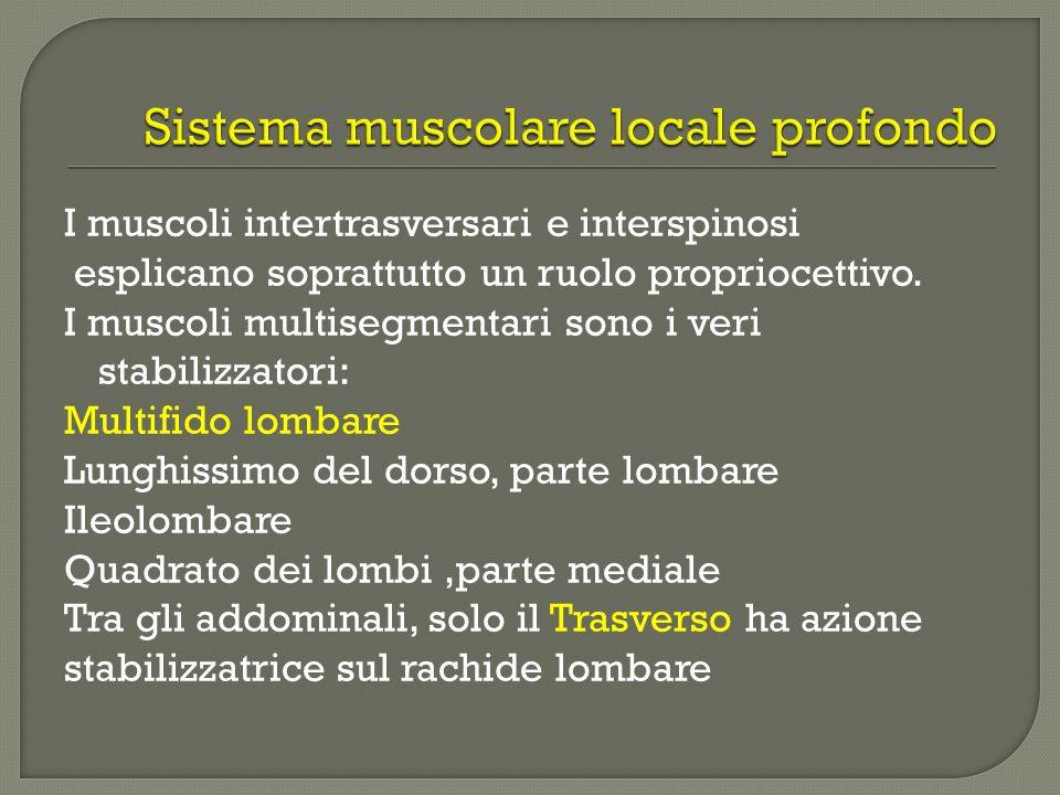I muscoli intertrasversari e interspinosi esplicano soprattutto un ruolo propriocettivo. I muscoli multisegmentari sono i veri stabilizzatori: Multifi