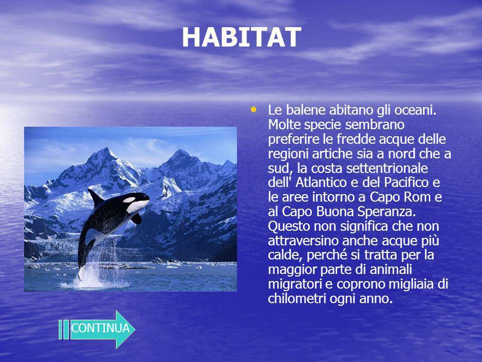 HABITAT Le balene abitano gli oceani.