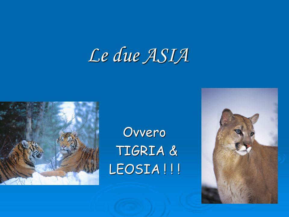 Le due ASIA Ovvero TIGRIA& TIGRIA& LEOSIA ! ! !