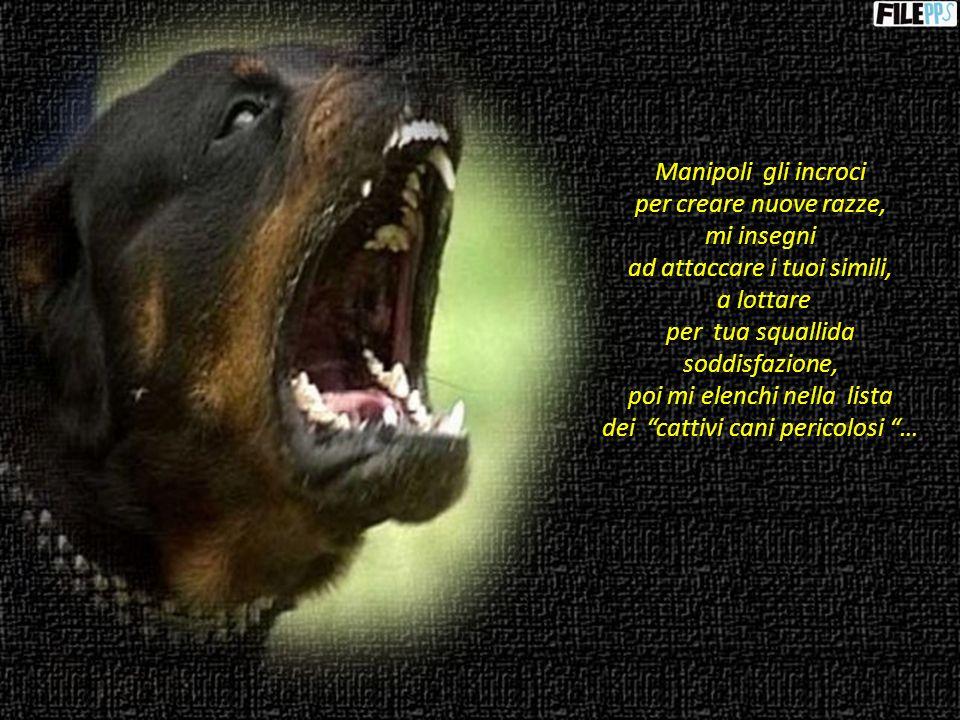 Un essere abietto che non ha riguardo per i bambini, i vecchi, i più deboli non può averne per me, che sono solo un animale …