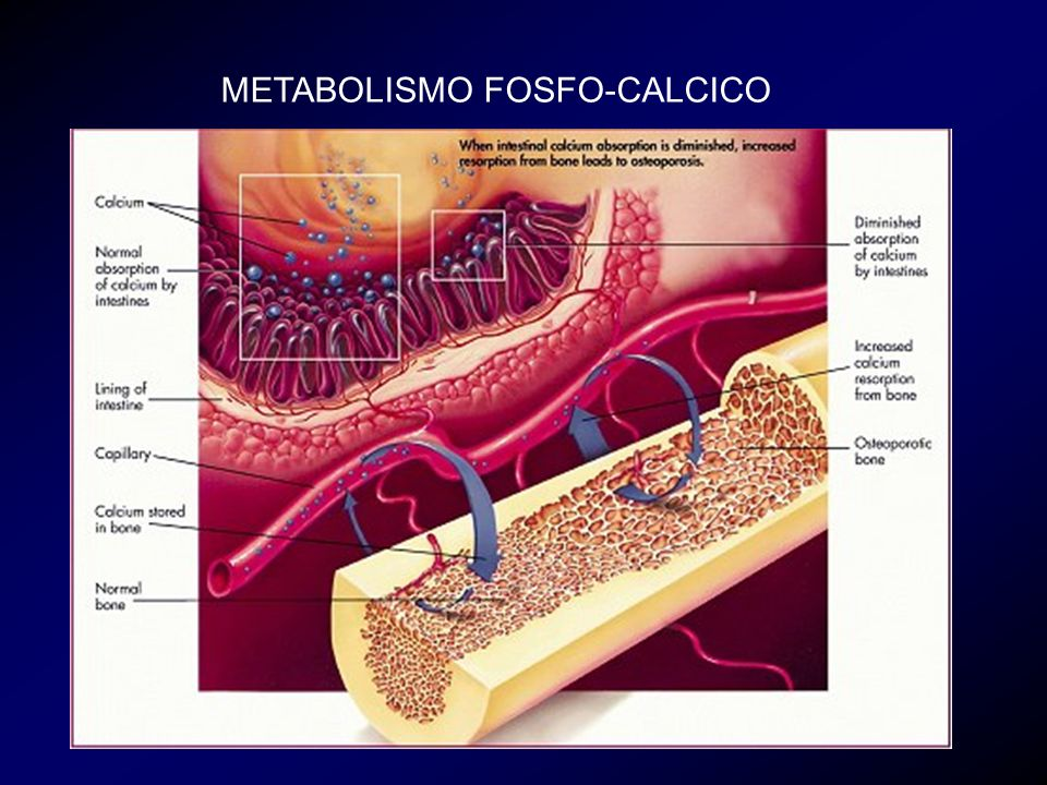 Favorisce lassorbimento di Ca e P a livello intestinale Aumenta il riassorbimento osseo (stimola il differenziamento degli osteoclasti) Aumenta la capacità del PTH di riassorbire Ca a livello renale Ha un effetto netto positivo sullosso, in quanto fornisce Ca e P per la formazione di osso mineralizzato