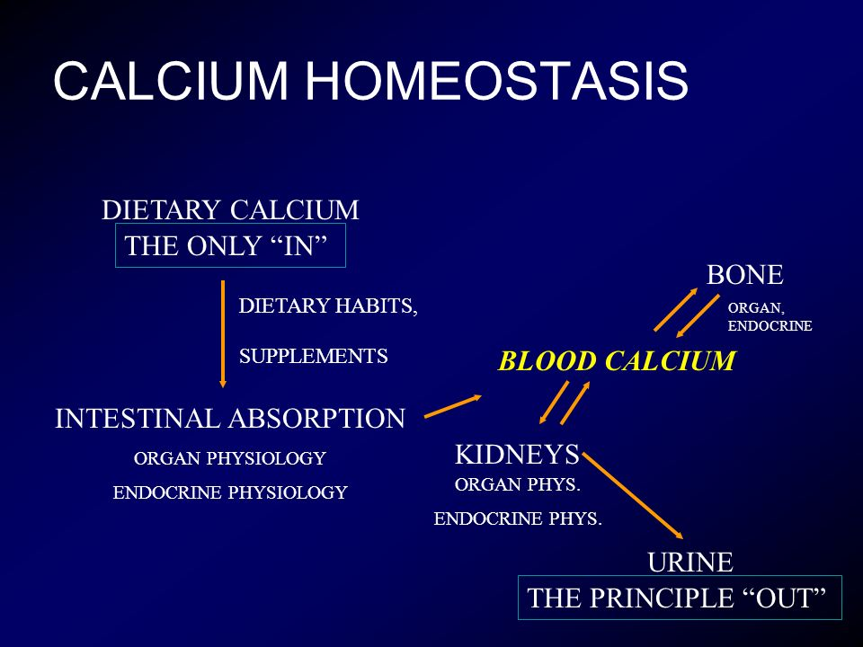 CALCIUM HOMEOSTASIS DIETARY CALCIUM INTESTINAL ABSORPTION ORGAN PHYSIOLOGY ENDOCRINE PHYSIOLOGY DIETARY HABITS, SUPPLEMENTS BLOOD CALCIUM BONE KIDNEYS