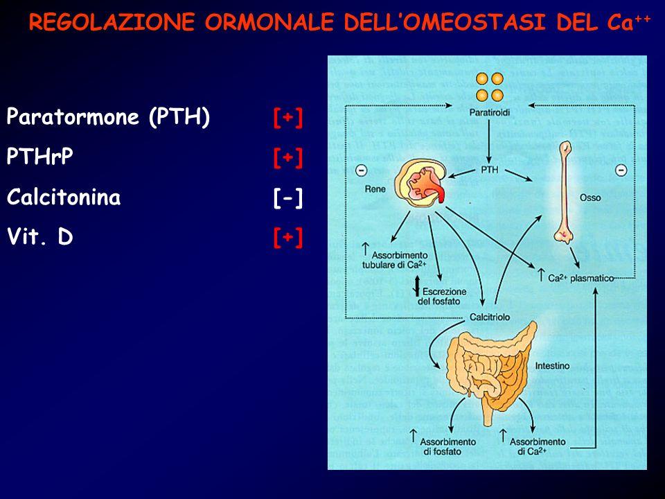 REGOLAZIONE ORMONALE DELLOMEOSTASI DEL Ca ++ Paratormone (PTH)[+] PTHrP [+] Calcitonina [-] Vit. D [+]