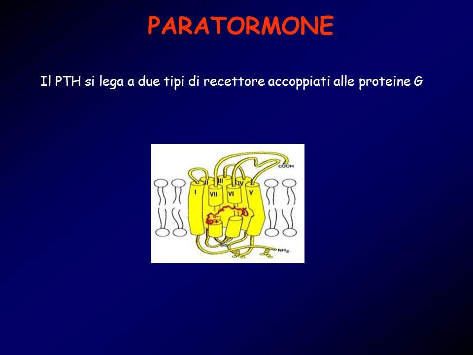 PARATORMONE Il PTH si lega a due tipi di recettore accoppiati alle proteine G