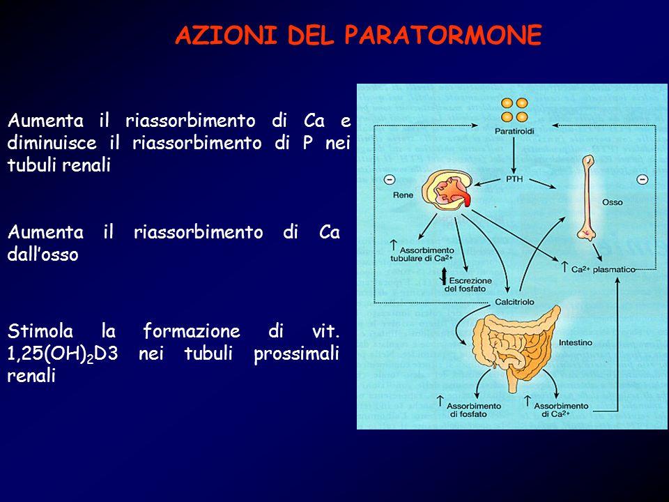 AZIONI DEL PARATORMONE Aumenta il riassorbimento di Ca e diminuisce il riassorbimento di P nei tubuli renali Aumenta il riassorbimento di Ca dallosso