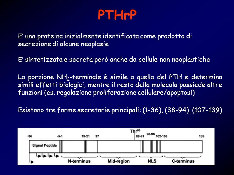 PTHrP Esistono tre forme secretorie principali: (1-36), (38-94), (107-139) E una proteina inizialmente identificata come prodotto di secrezione di alc