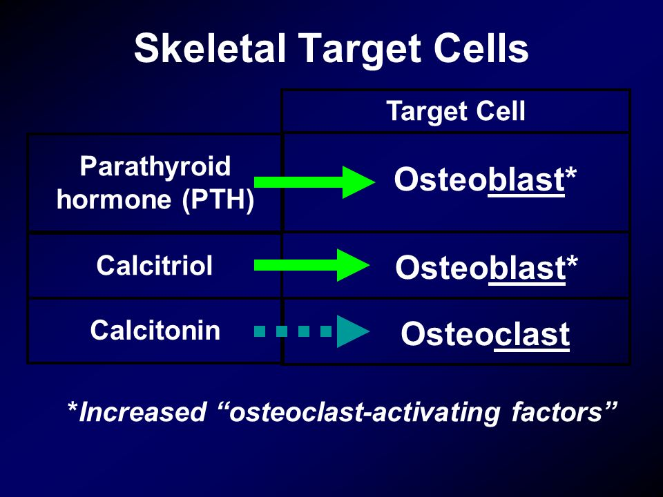 Target Cell Parathyroid hormone (PTH) Calcitriol Calcitonin Osteoblast* Osteoclast Skeletal Target Cells *Increased osteoclast-activating factors