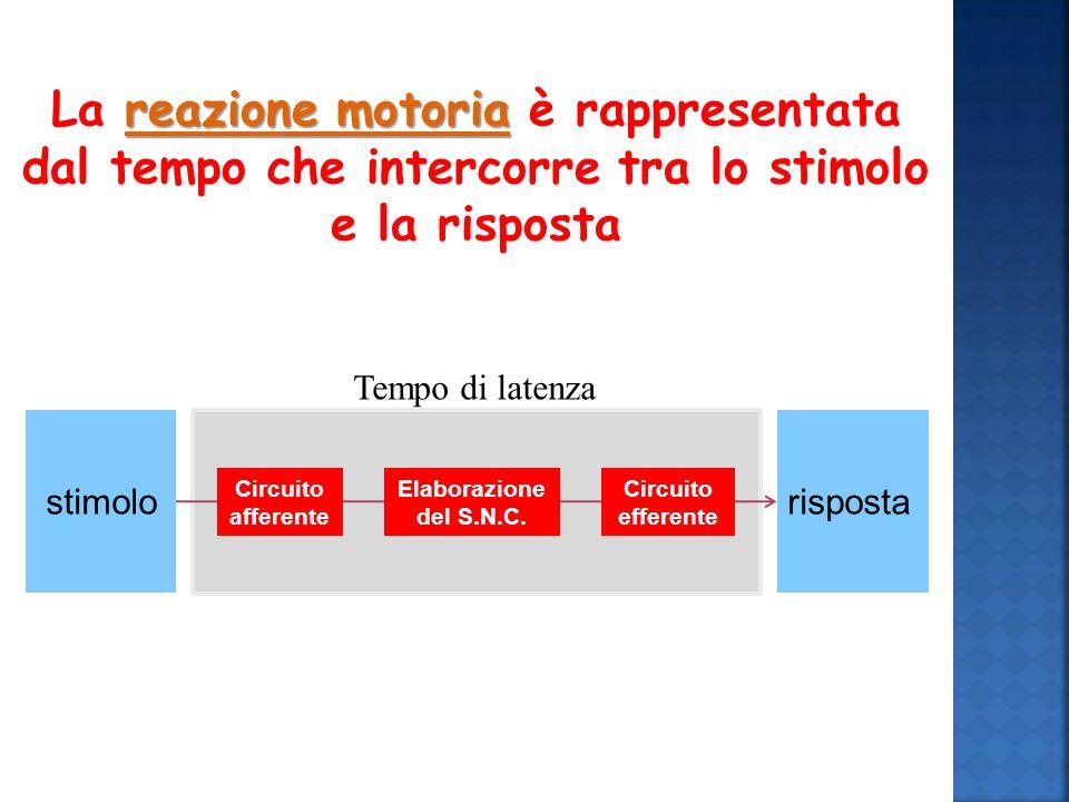 reazione motoria La reazione motoria è rappresentata dal tempo che intercorre tra lo stimolo e la risposta Tempo di latenza stimolo risposta Elaborazione del S.N.C.