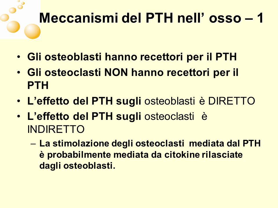 Meccanismi del PTH nell osso – 2 I fattori che stimolano le colonie dei Macrofagi (M-CSF) e i fattori che attivano il recettore del ligando ReNF-kN (RANKL) sono gli unici fattori prodotti dall osso in condizioni ed entità fisiologiche M-CSF provoca la proliferazione di precursori precoci degli osteoclasti RANKL sono prodotti dagli osteoblasti e si legano agli osteoclasti per –Promuovere la differenziazione degli osteoclasti –Aumentare lattività degli osteoclasti maturi –Inibire la apoptosi degli osteoclasti La osteoprotegerina (OPG) è un recettore che inibisce RANKL nella stimolazione degli osteoclasti