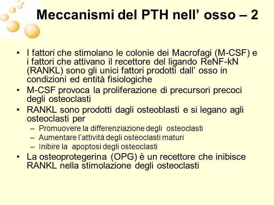 Meccanismi del PTH nell osso – 3 PTH aumento continuo Massa ossea RANKL e OPG Attività osteoclasti PTH aumento intermittente Massa ossea RANKL e OPG Attività osteoclasti Attività osteoblasti