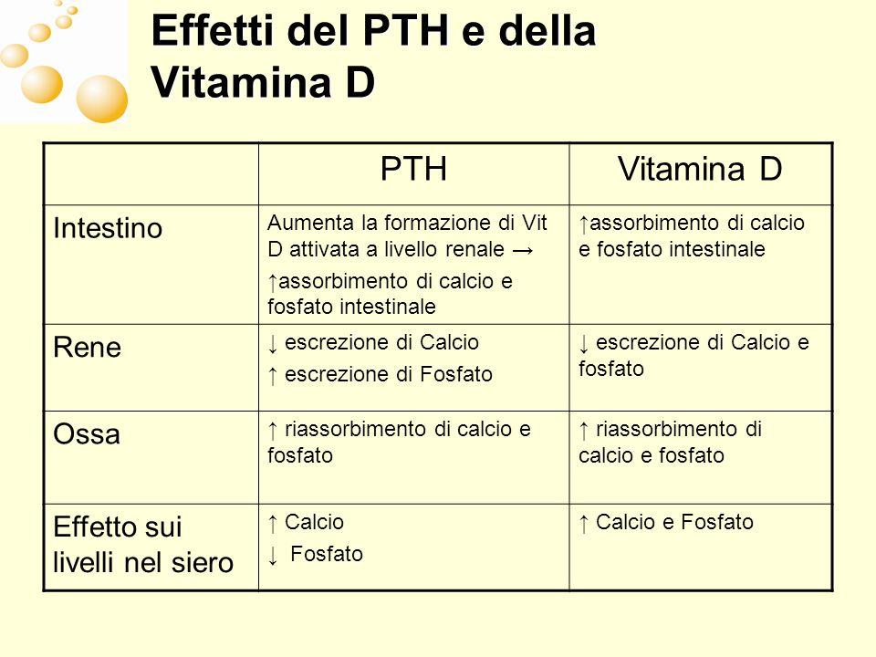 Sistemi-bersaglio del PTH Il PTH stimola lattività osteoclastica, e quindi Aumenta il riassorbimento di calcio dallosso; Aumenta i livelli plasmatici di calcio; Il PTH stimola il riassorbimento di ioni calcio nel tubulo renale distale, e quindi Riduce la quantità di calcio perso con le urine Aumenta i livelli di calcio plasmatici.