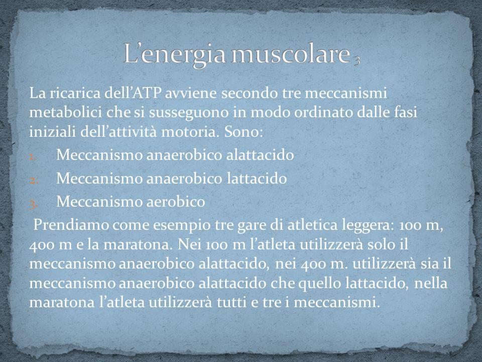 La ricarica dellATP avviene secondo tre meccanismi metabolici che si susseguono in modo ordinato dalle fasi iniziali dellattività motoria. Sono: 1. Me
