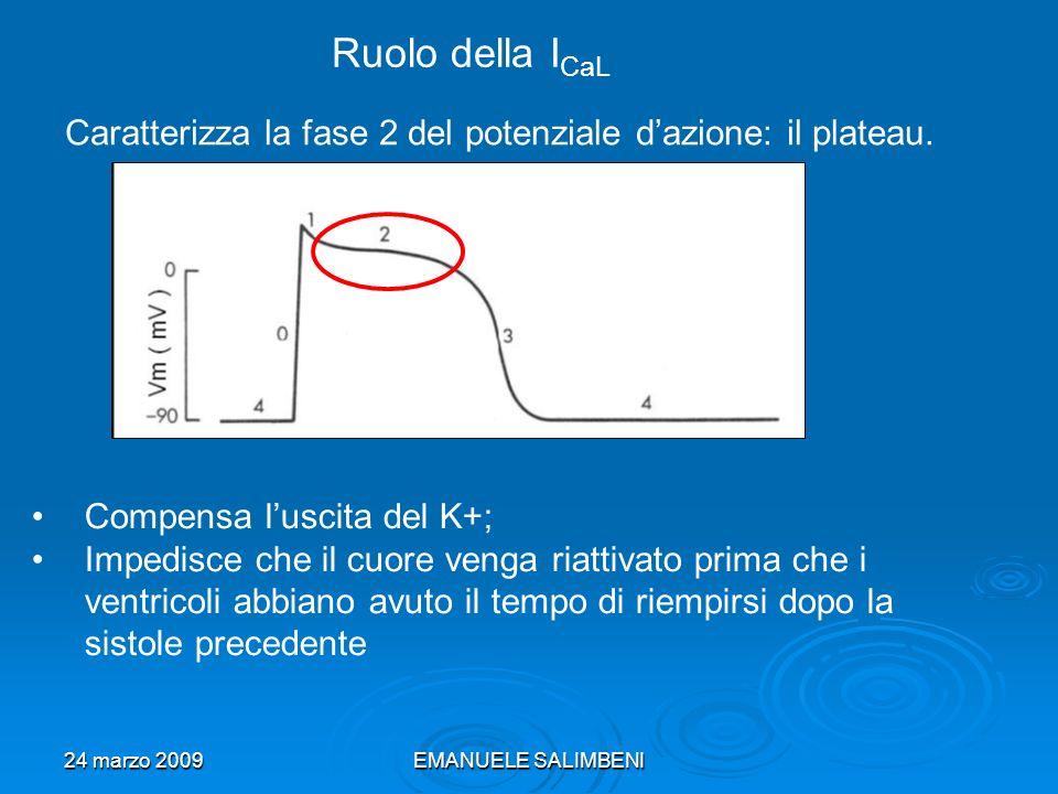 24 marzo 2009EMANUELE SALIMBENI Ruolo della I CaL Caratterizza la fase 2 del potenziale dazione: il plateau.