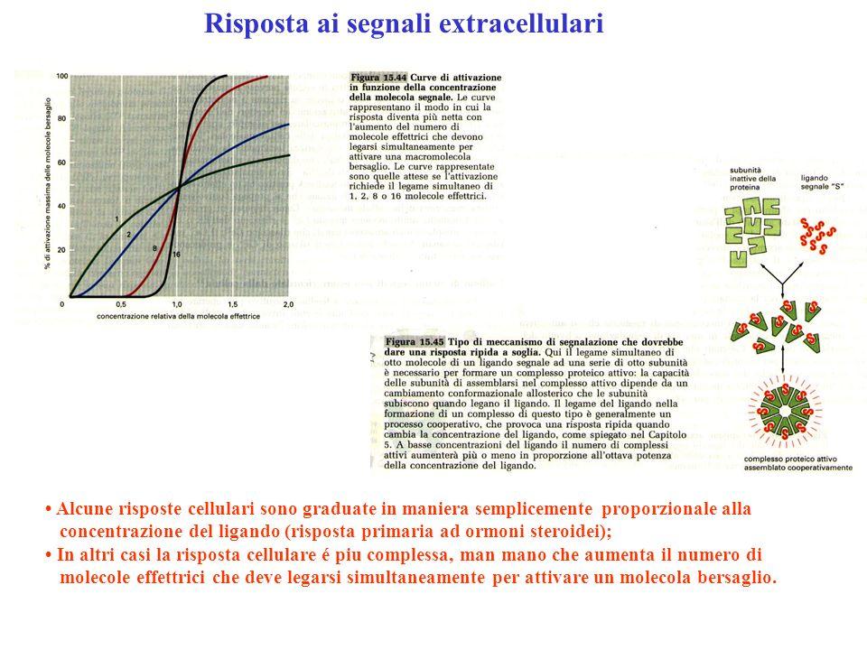 Alcune risposte cellulari sono graduate in maniera semplicemente proporzionale alla concentrazione del ligando (risposta primaria ad ormoni steroidei)