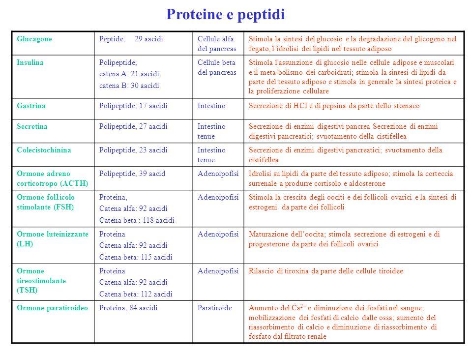 Proteine e peptidi GlucagonePeptide, 29 aacidiCellule alfa del pancreas Stimola la sintesi del glucosio e la degradazione del glicogeno nel fegato, li
