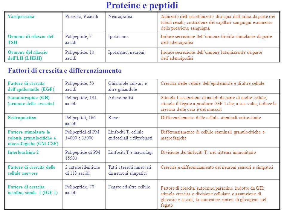 Proteine e peptidi VasopressinaProteina, 9 aacidiNeuroipofisiAumento dellassorbimento di acqua dallurina da parte dei tubuli renali; costrizione dei c