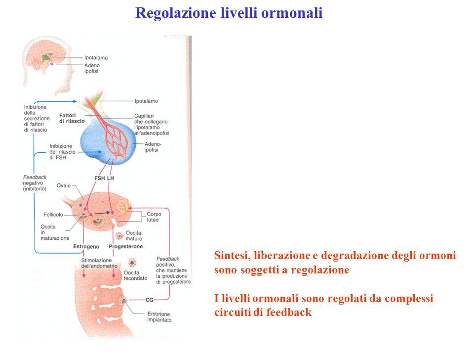 Regolazione livelli ormonali Sintesi, liberazione e degradazione degli ormoni sono soggetti a regolazione I livelli ormonali sono regolati da compless