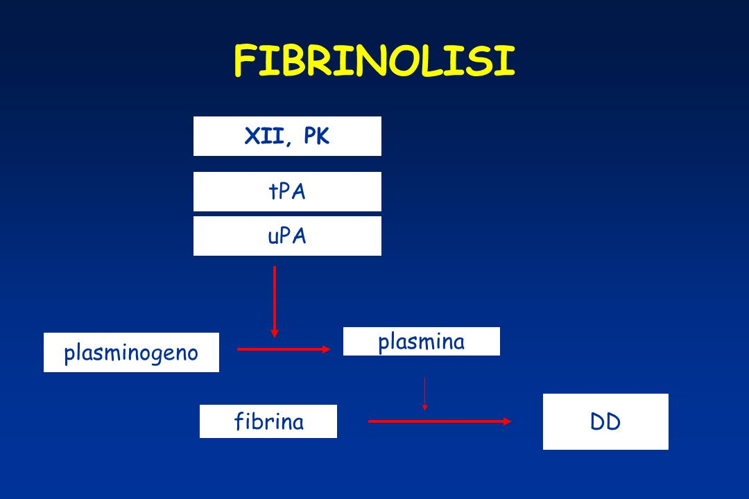 FIBRINOLISI tPA uPA XII, PK plasminogeno plasmina fibrina DD