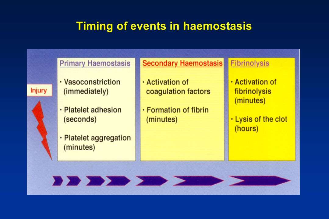 Timing of events in haemostasis