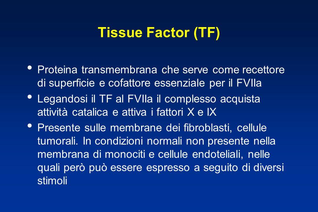 Tissue Factor (TF) Proteina transmembrana che serve come recettore di superficie e cofattore essenziale per il FVIIa Legandosi il TF al FVIIa il complesso acquista attività catalica e attiva i fattori X e IX Presente sulle membrane dei fibroblasti, cellule tumorali.
