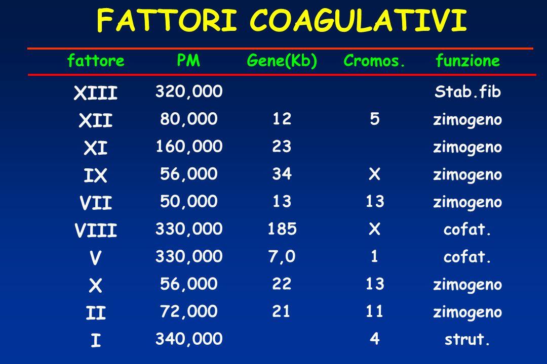 FATTORI COAGULATIVI fattorePMGene(Kb)Cromos.funzione XIII 320,000Stab.fib XII 80,000125zimogeno XI 160,00023zimogeno IX 56,00034Xzimogeno VII 50,00013 zimogeno VIII 330,000185Xcofat.