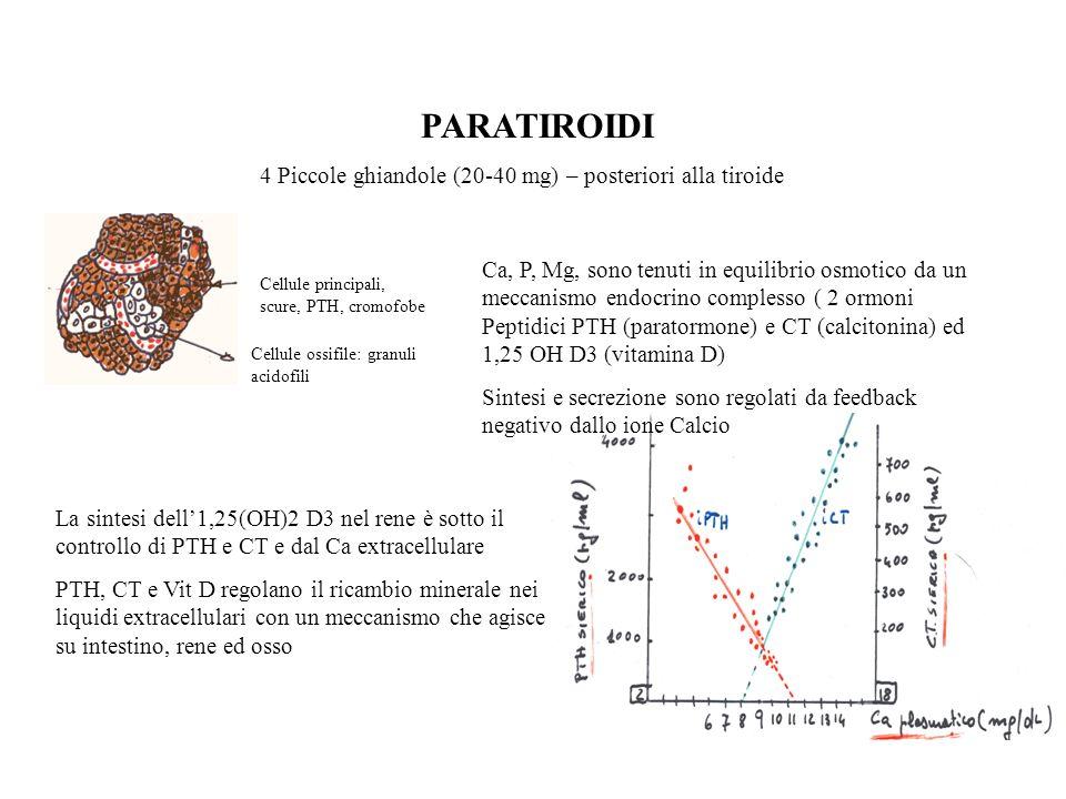 CALCITONINA Polipeptide di 32 AA, secreta dalle cellule parafollicolari della tiroide con attività biologica solo da molecola intera Rapida secrezione in risposta allaumeto del Ca palasmatico con azione su rene, osso per il ripristino dellomeostasi calcica Secrezione differente per quantità tra uomo e donna: nel primo con laumento della Ca-emia si ha una secrezione del 70-80% di CT, mentre nella donna laumento varia tra il 40 ed il 60 % Mentre per un aumento o diminuzione del PTH si hanno patologie, aumenti o diminuzioni di CT non provocano seri danni sul metabolismo minerale Effetti della CT sulla diminuzione del Ca ematico 1.Effetti immediati: diminuita osteolisi della membrana osteocistica con deposizione di sali di Ca 2.Effetti ad unora: aumento dellattività osteoblastica 3.Effetti a lungo termine: diminuita produzione di nuovi osteoclasti I Sali di Ca scambiabile costituiscono l1 % del Ca osseo totale.