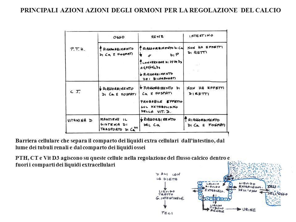 PRINCIPALI AZIONI AZIONI DEGLI ORMONI PER LA REGOLAZIONE DEL CALCIO Barriera cellulare che separa il comparto dei liquidi extra cellulari dallintestin